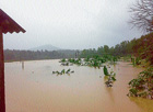 plantation under water Several paddy fields and banana plantations were inundated at Balehonnur in Chikmagalur district on Saturday after the water-level in River Bhadra rised. DH photo