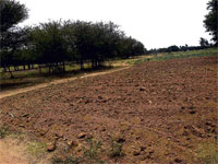 A view of a farmland which has dried up due to lack of rains in Sonnavadi village in Mulbagal. DH PHOTO