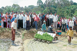 Farmers at the demonstration on paddy transplantation held in the fields of progressive farmer Bindanda Duleep Nanjappa at Hakattur near Madikeri.  DH photo