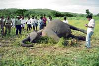 Elephant found dead at Hediyala forest in Bandipur national park.