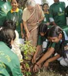 Plantation in Delhi