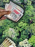 Central funds to enhance State's forest cover