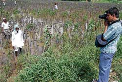 A photographer busy taking a picture of a farmer, who has suffered crop loss at Lakkundi village, in Gadag  district. DH Photo
