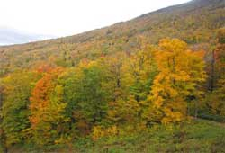 A place one must visit to see fall colors, Pic sent by Suma Basanth,Vermont,USA.