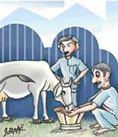 Uttar Pradesh jail officials seek cow's help to transform prisoners