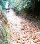 A partial view of road to Aldoor old Dalit colony. dh photo