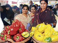 truly colourful:  Visitors take a look at the capsicums on display during the Krishi Mela on GKVK campus in Bangalore on Thursday. dh Photo