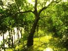 Centre asked to raise threat to Sundarbans at climate meet