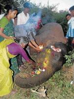 Herd, villagers mourn elephant's death