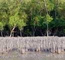 Sundarbans water warming eight times faster than global average