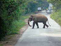 A tusker was found crossing the Shiradi ghat road on December 5 in the evening. DH photo