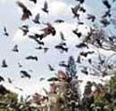 Bird feeders barred from entering HC premises