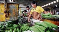 EU pact ends long trade battle over bananas