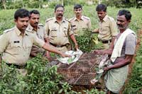 prized possession SI Rajshekhar Aradhya, farm owner Mahiam Das and other police personnel confiscating the rare birds, which were hidden by the Kollegal forest officials at a farm near Maria Mangala, Thomiyaar Palya, Hanur. DH photo
