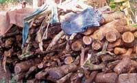 'Firewood illegally stored'