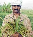 Humble farmer dreams big