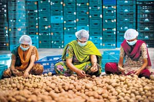 Factory workers sort through potatoes that are grown on local farms for Wal-Mart in Haider Nagar, Punjab.  NYT