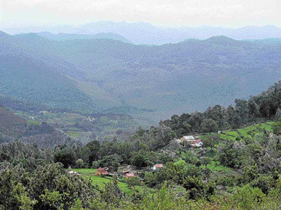 At the end of your stay in Yercaud, you'll feel closer to heaven.