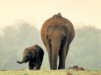 GAME ON: Elephants by the Kabini. (Photo by the author)