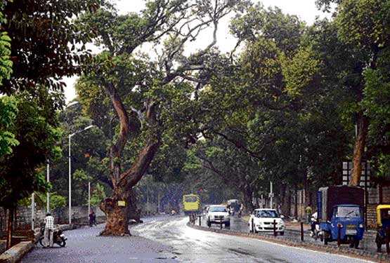 A stretch of the Jayamahal Road proposed for widening which entails felling of as many as 41 trees. DH photo