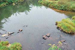 apathy: Cauvery stream in Bethri village near Virajpet.