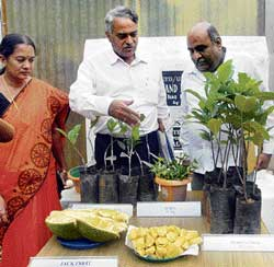 IT's special: Assistant Professor Shyamalamma S,  Division of Horticulture, University of Agricultural Sciences, Bangalore, and Dean Dr K Narayana Gowda display a special variety of jackfruit at GKVK campus in Bangalore on Wednesday. DH Photo