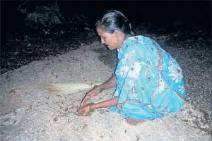 A woman collecting alates under the streetlight on Friday night on the outskirts of Bagepalli town. DH Photo
