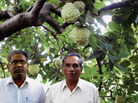 Success story: Scientists P Sampath Kumar (left) and (right) S H Jalikop.