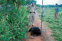 A police official looks at the carcass of a bear, in Gundlupet in Chamarajanagar on Thursday. Dh Photo