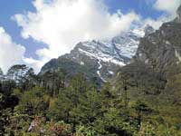 MYSTICAL:The Singba Rhododendron Sanctuary in Sikkim.