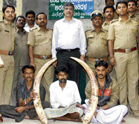 trapped: Forest Department Police display ivory tusks seized from the accused Shankara, Raju and Beerappa. DH Photo