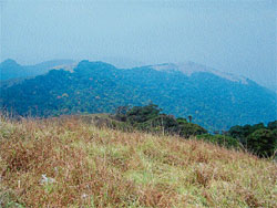 ENCHANTING VIEW: A partial view of Western Ghats from Ranipuram. PHOTO/AUTHOR