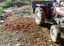 going waste: Heaps of tomatoes dumped at the APMC yard in Bagepalli taluk. DH Photo