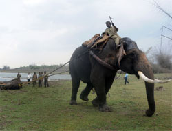 heave ho! Dasara elephant Arjuna drags the injured elephant from the backwaters of Taraka Reservoir in HD Kote, Mysore, on Thursday. dh photo
