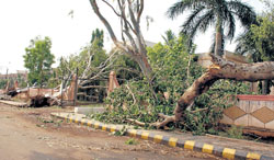 damage: Several trees at Vidyagiri in Bagalkot were uprooted due to heavy rains on Thursday night. DH photo