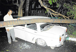 Aftermath: A car crushed under a tree at Indiranagar on Thursday. DHPhoto
