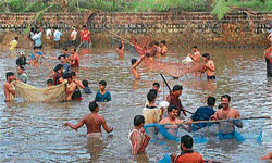Devotees participating in the fish catching ceremony at Khandige in Pavanje near Surathkal on Sunday. DH PHOTO