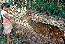 A girl feeding the grass to a spotted deer at Gendekatte Wildlife Sanctuary, in Hassan. Dh photo