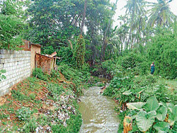 breeding place: The open storm water drain that is posing health threat to citizens. dh photo