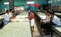 Worrisome: Silk growers and reelers at the cocoon market in Chikkaballapur. DH Photo