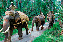 Forest staff on an 'Operation elephant' at Alur taluk limits. dh file photo