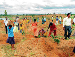 People power:  Greening of the tank bed at Tarikatte in Tumkur district.