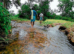 crop loss: Inundated paddy fields near Thibbanahalli in Mandya. dh photo