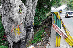 Doomed: Trees marked for felling to facilitate widening of the Sankey Tank Bund Road. DH photo