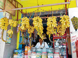 A MATTER OF TASTE: The Nanjangud  banana is known for its unique taste.