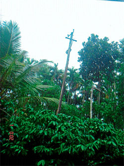 The wooden electric pole, which has been in a precarious state over the last 30 years, at Hulse near Balehonnur.
