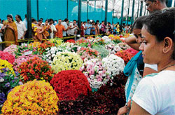 nature's bounty: The colourful flowers on display at the Lalbagh Botanical Gardens drew about 60,000 visitors on Sunday. dh Photo