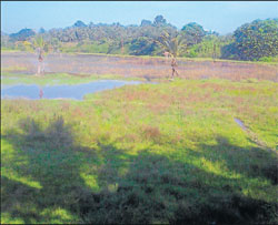 Water stagnated on farm land at Arkulabail.