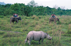 Bounty : A single-horned rhinoceros at the Kaziranga National Park in Assam. Photo by author