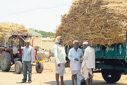 DISTRESS: Farmers arrive at a cattle fair with tractor loads of fodder in Gadag. DH Photo